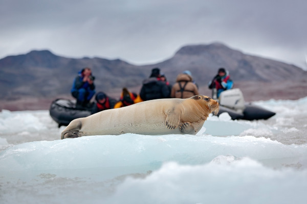 Arctic cruise wildlife