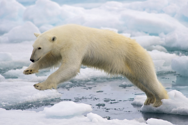 Northwest Passage cruise - wildlife