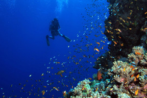 South America cruise activites - diving