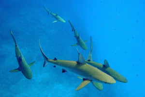 South America cruise wildlife - sharks