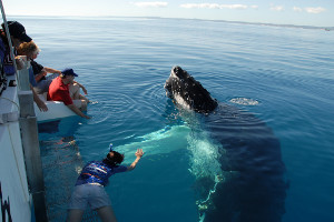 South America cruise wildlife - whales
