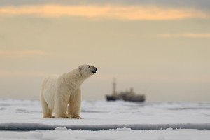 North Pole cruise wildlife polar bear
