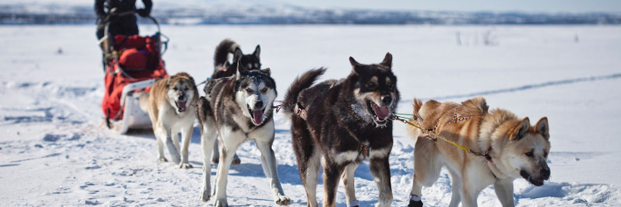 best-things-to-do-in-the-Arctic-dog-sledding
