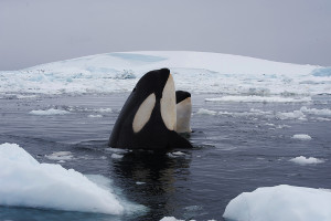 choosing the right cruise - antarctica