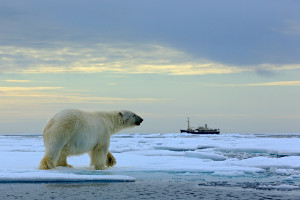 choosing the right cruise - arctic