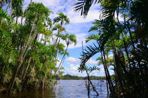 Amazon cruise highlights - Pañayacu River