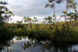 Amazon cruise highlights - Yasuni National Park