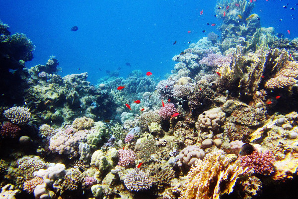 Easter Island cruise activites - diving