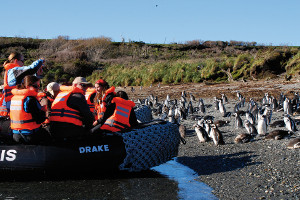 Patagonia cruise activites - wildlife watching