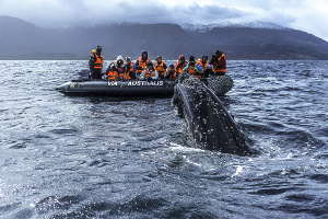 Patagonia cruise itineraries - 5 day