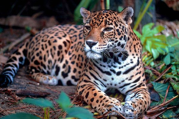 Amazon River facts - wildlife