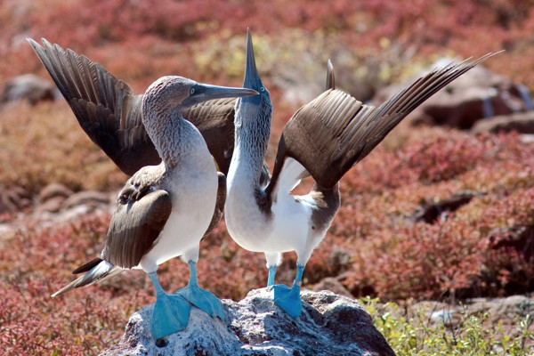Best things to do in the Galapagos - Wildlife watching
