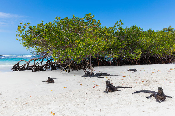 Best things to do in the Galapagos - tortuga bay